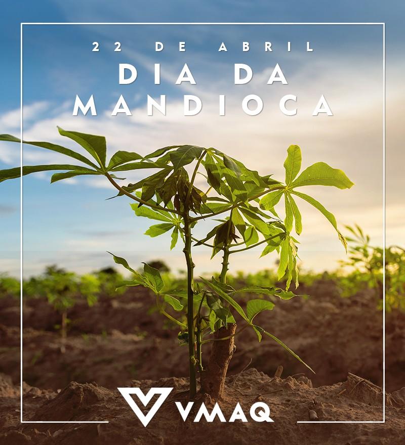 Dia da Mandioca VMAQ 3 - Mercado comemora Dia da Mandioca