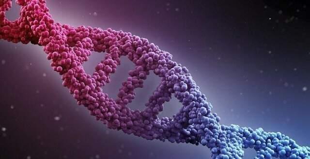 Pesquisa de melhoramento genético vai oferecer variedades mais produtivas de Mandioca